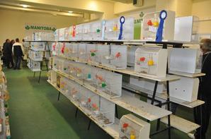 16ος  Παγκρήτιος διαγωνισμός πτηνών συντροφιάς 2012. 16th pancretan exhibition 2012