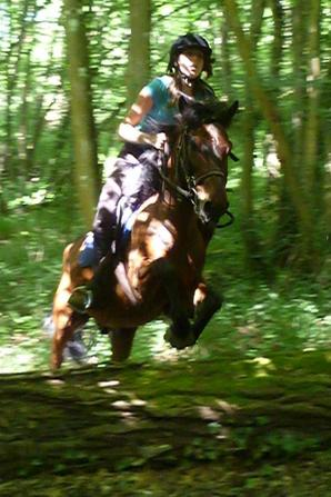 Les chevaux qui m'ont marqué