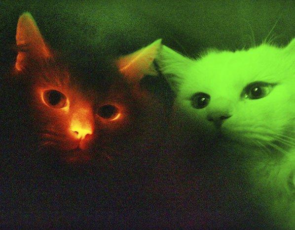 Mise à jour : mardi 30 avril 2013 16:30 | Par Thomas Jutant Quand les scientifiques rendent les animaux fluorescents