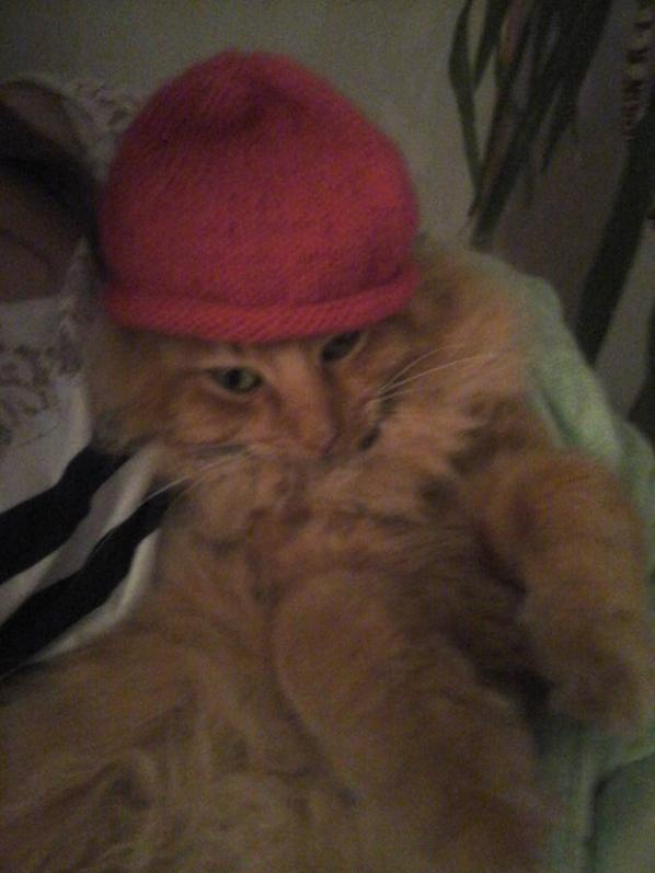 mes derniers encours,1gilet en 6mois pour ma petite niece,pour un essai que mon chat a adopter 1joli bonnet naissance,et mon lili point vitrifie et je vais customiser les cotés