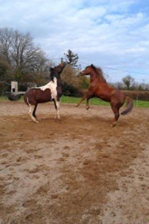 Les chevaux aussi sont badass
