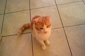 voici mon chat