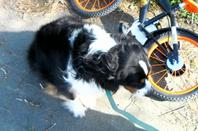 petite balade au parc chambort a cholet avec mon loulou et ma chienne