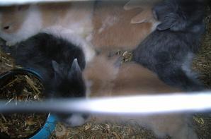 la sieste chez les bébés lapinous