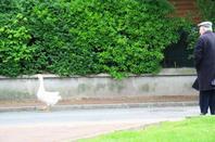 29.04.2012 rando sur Soisy