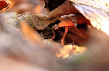 Tu te cache sous des feuilles mais je t'ai vu !