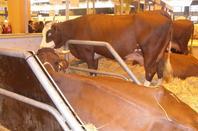 Salon de l'agriculture n°2