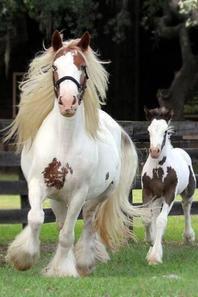 compilation de chevaux