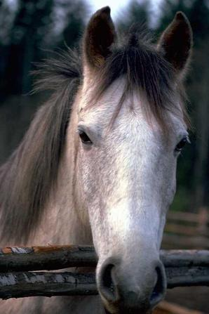 les chevaux que j'aime 1