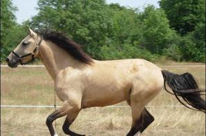 les chevaux que j'aime 3
