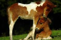les chevaux que j'aime 4