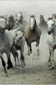 les chevaux que j'aime 5