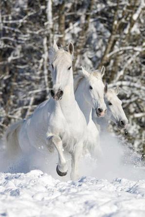 les chevaux que j'aime 6