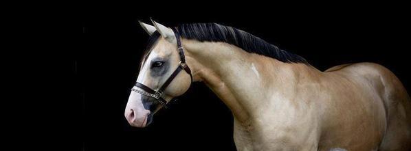 les chevaux que j'aime 7