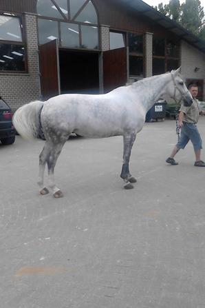 une petite partie du manége du n°1 des cavalier de Belgique