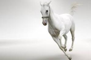 compil chevaux