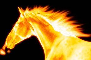 chevaux d'eaux et de feux