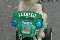 pauvre chien .....