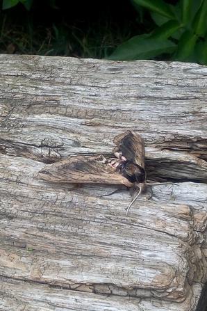 quelqu'un pourrait me dire le nom de cet animal? (photo prise au travail cette apres-midi)