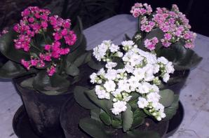 aujourd'hui grand nettoyage du jardin pour mettre les quelques fleurs achetées au marché