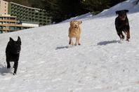 les filles a la neige 2014