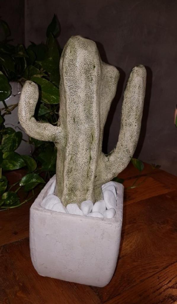 Cactus d'une élève adulte