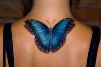 Butterflies :)