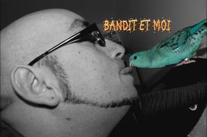 Bandit (perruche eam adopte le 1er novembre 2013