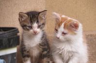 Les chaton 2013