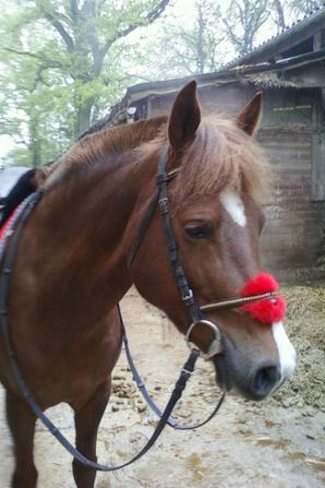 poney <3