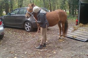 chevaux club