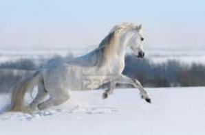 neige et chevaux