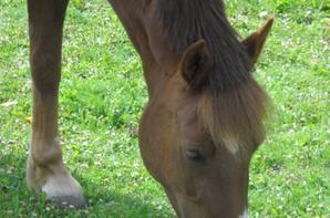 photo chevaux