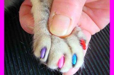 manucure pour les chats?! waouh!! j'adore!! =D