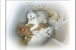 pour tous ceux qui aiment les chats!!