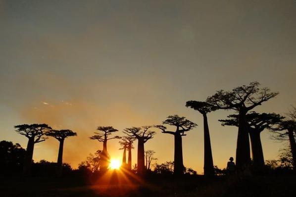 TRAVEL TO MADAGASCAR