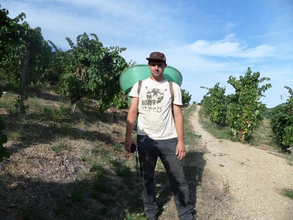 Vendange sur les coteaux Toulaudais - cuvé 2015