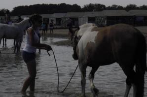Un poney si parfait (Lamotte 2011)