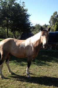 Un poney heureux est un poney dehors !