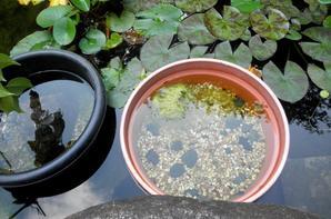Journée près de l'océan, et Kamakura (partie 3)