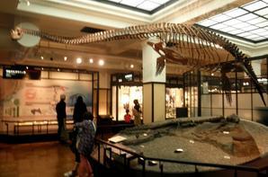 Musée des sciences de Tokyo