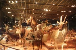 Musée des sciences de Tokyo (partie 2)