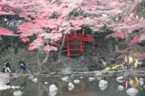 Jardins Koishikawa Kôraku-en (partie 3)