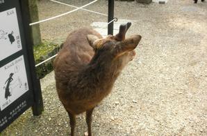 Petit voyage, deuxième jour: Nara (partie 6)