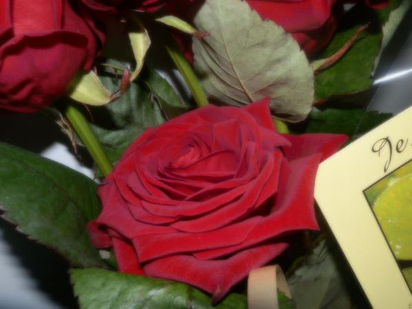 <3 Pendant 1 an tu m'as offert des roses pour célébré les mois qui passer entre nous, tu as toujours eu tellement d'attention envers moi... Je t'aime si fort