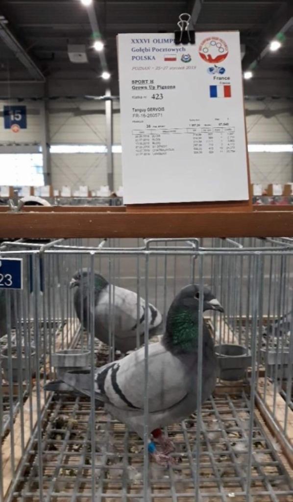 Mes deux pigeons présent à Poznan !