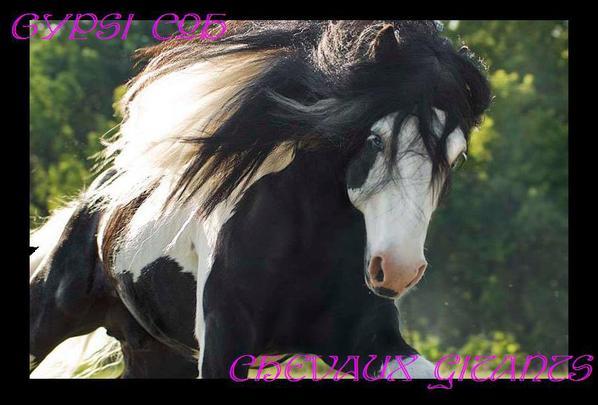Les chevaux des gitants