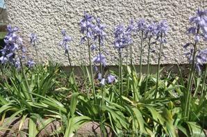 Quelques fleurs de mon jardin!