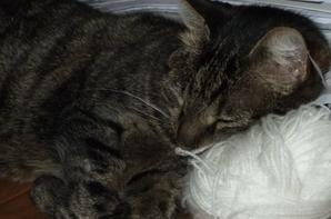 Moumoune: c'est MA pelote, MON oreiller!