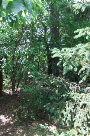 Le fond de mon jardin: un petit sous-bois!